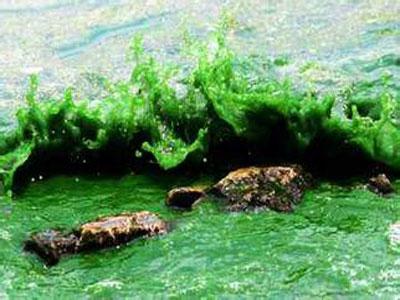 海洋微生物被高二氧化碳含量不可逆转地改变了