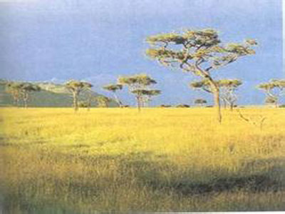 植树可能伤害生态系统