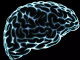 在子宫中种大脑,血管的作用不止是运输管道