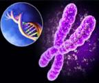 TP53突变能否影响MDS对地西他滨的临床响应?