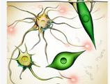 Cell揭示埃博拉病毒发生突变而更好地感染人细胞