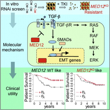 Cell:TGF-betaR抑制剂阻断癌症的逃生线路