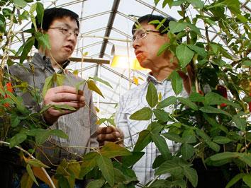 农业部:转基因食品致癌纯属造谣