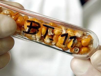 我们为什么种植转基因作物?