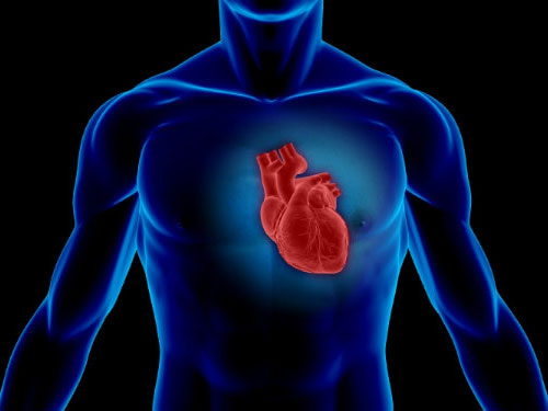 "3D 打印""登月行动"":科学家计划打印出完整心脏"