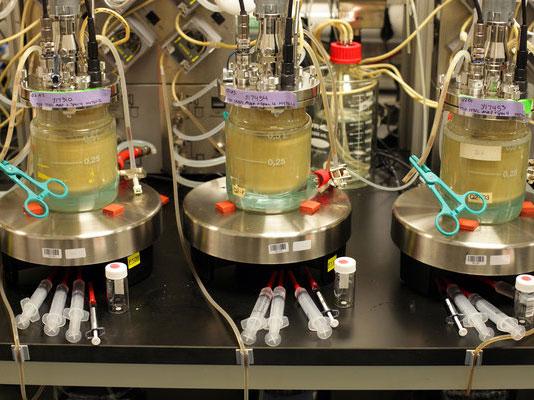 转基因香料,产业革命还是农民的灾难?