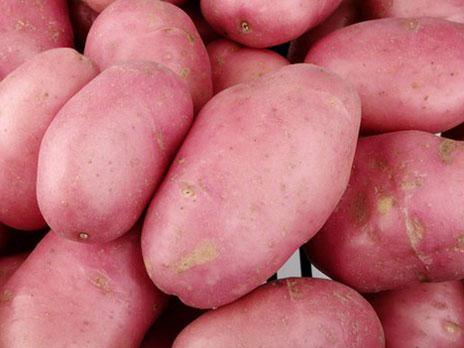 英国科学家研发出抗病害产量高的转基因土豆