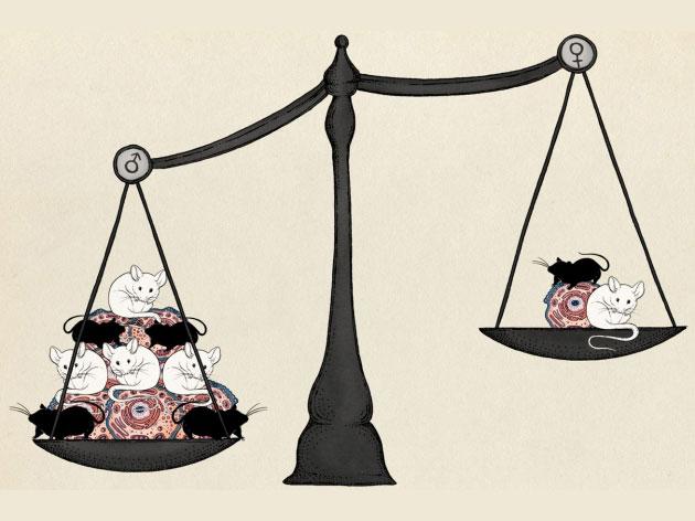 "Nature:实验动物与细胞也要""性别平等"""