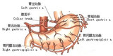 栓塞胃左动脉治疗单纯性肥胖安全有效