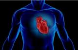 什么样的3D打印器官会流血?