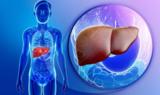 肝移植的新方法:使用损伤的肝脏替换垂死的肝脏