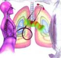 HMGB1蛋白是改善哮喘的关键
