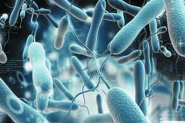 ACG 2017 指南:幽门螺杆菌感染的治疗