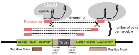 PLoSComputBiol:开发出CRISPETa软件大规模设计用于基因组剔除的成对sgRNA