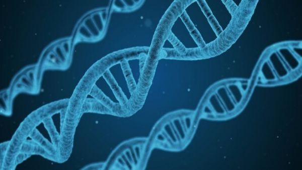 科学家证明他们可以在一克DNA当中存储215PB数据