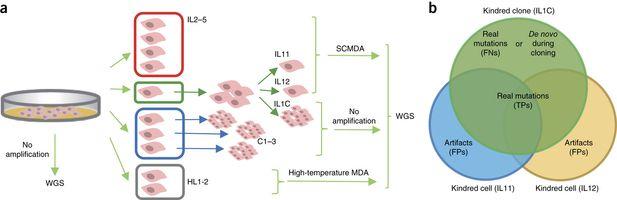 重磅!NatMethods单细胞基因组突变检测取得突破性进展
