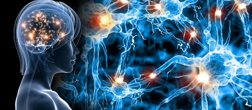 华大基因携手美国艾伦研究所,开启全球脑科学计划