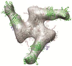 三项研究证实合成HIV包膜模拟物有望诱导广谱中和HIV抗体产生