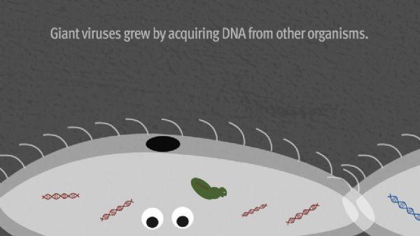 病毒的起源之谜