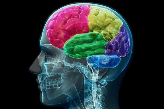 科学家强调性别差异对大脑功能的影响