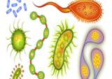 一表看懂|常见细菌感染性疾病的流行病学特征