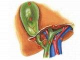 影像学方法评估胆嚢功能的研究进展