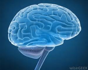Oncotarget:新联合疗法或可有效治疗恶性脑瘤