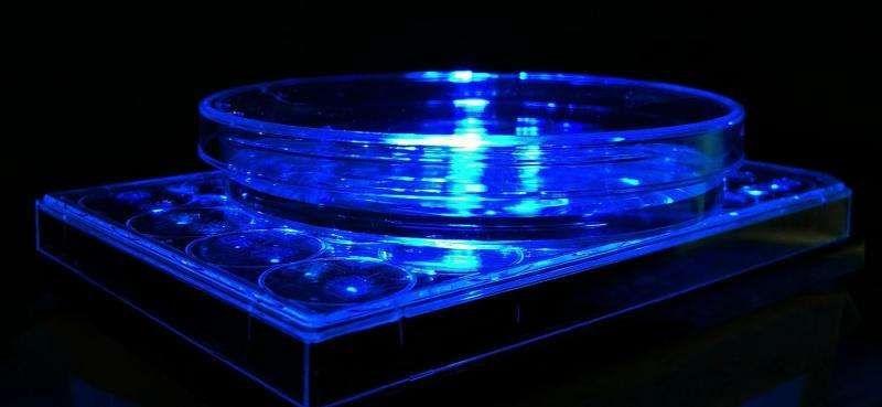 NucleicAcidsResearch科学家成功用光控制细胞基因表达