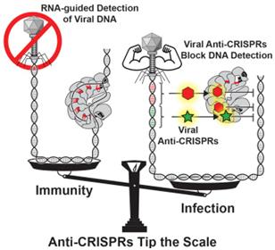 2017年4月CRISPR/Cas亮点盘点