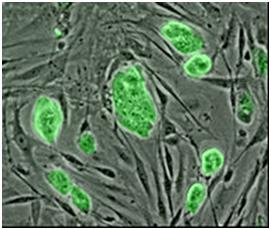 Nature:重磅!一些人胚胎干细胞系发生癌症相关突变