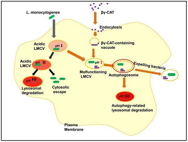 JournalofInfectiousDiseases:研究揭示细胞清除病原体新策略和效应分子