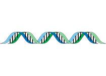 宿主细胞自然分裂可摆脱乙肝病毒DNA