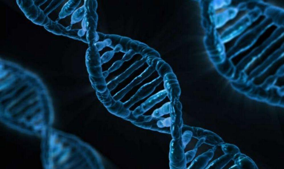HMG:美国科学家灵长类动物基因编辑试验首获成功