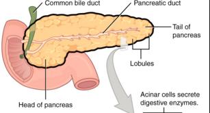 什么样的胆囊息肉需要切除?听听最新指南意见