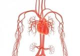 一文读懂:急性肾损伤对肾外脏器的影响