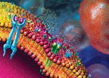 [ASH2016]免疫检查点抑制剂治疗恶性血液系统肿瘤研究进展