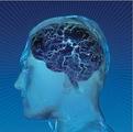 内侧颞叶癫痫脑微结构变化磁共振研究进展