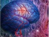 高分辨率磁共振成像在颅内动脉粥样硬化疾病中的应用