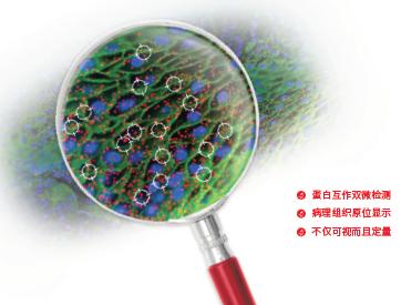 看得见的蛋白互作新技术DuolinkPLA