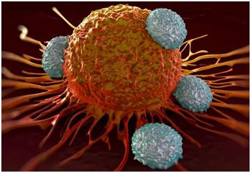 NatCommun:一种潜在的免疫疗法可能增加某些癌症中的肿瘤生长