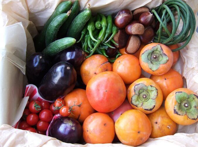 药补不如食补!饮食习惯如何改善机体健康降低多种疾病的发生风险?