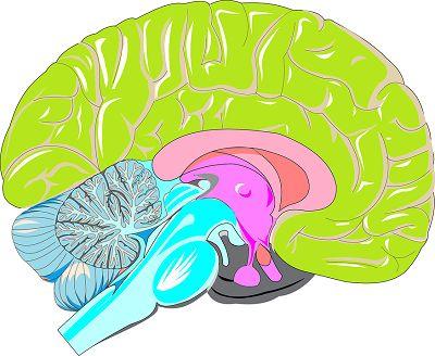 SciSignal:大脑受损的信号是如何激活炎症反应的?