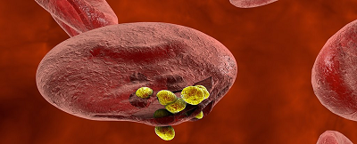 Science:单基因突变能够显著降低疟疾的感染风险