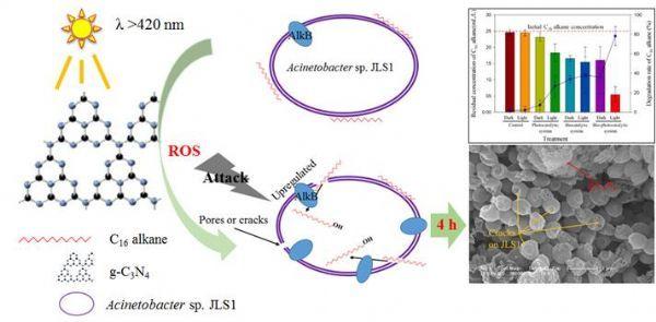 东北地理所生物-光催化剂耦联修复石油污染研究获进展