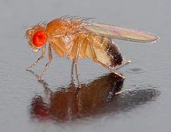 Nature:重大突破!在果蝇大脑中发现一种新的视紫红质