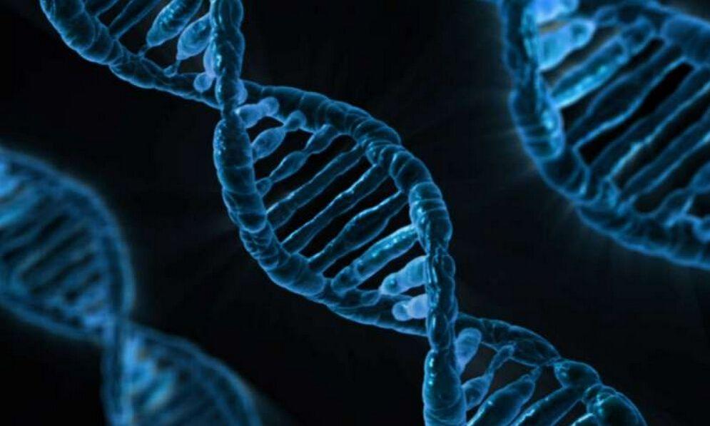 Science:人类机体不断发展的自然选择往往能够有效抵御诱发损伤的遗传突变