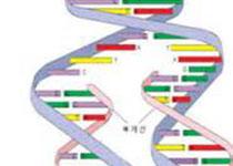 研究发现与癫痫和智障有关的最新分子机制