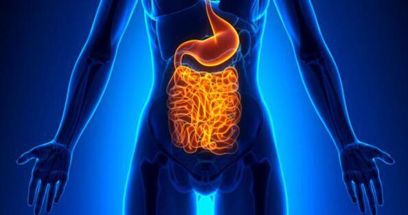 肠道菌群如何影响患癌风险及机体对疗法的反应
