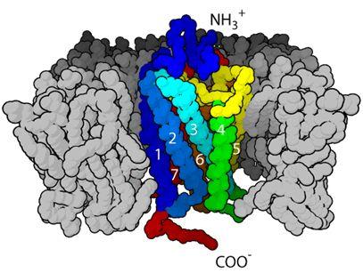 Nature:重磅!中国科学家解析出一种B类G蛋白偶联受体全长结构,有助开发出新的2型糖尿病药物