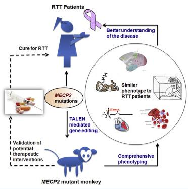 同济大学,昆明理工大学Cell最新文章:基因编辑技术构建新模型